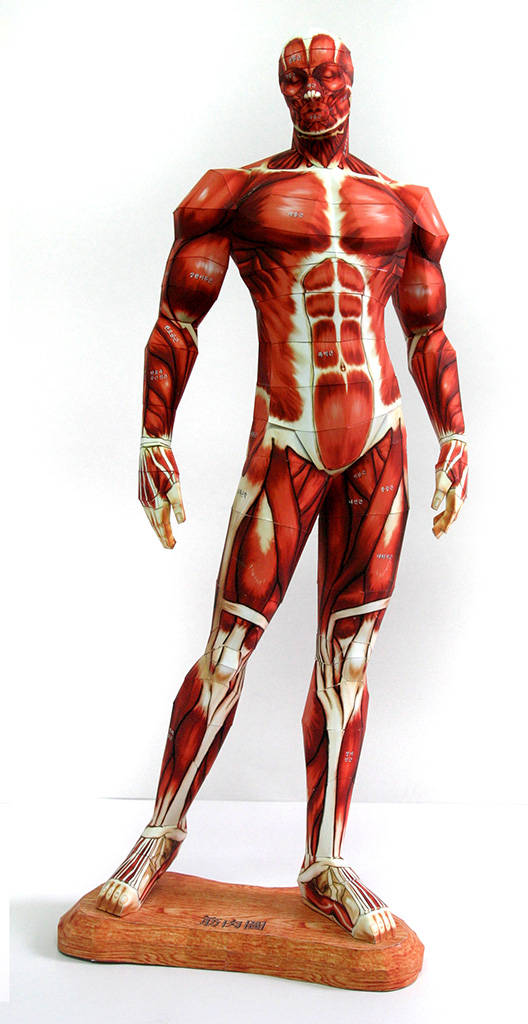 humanAnatomy1